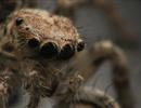 Nejlepší makrofotografie ze života hmyzu