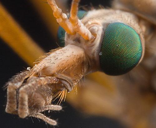 Makrofotografie hmyzu
